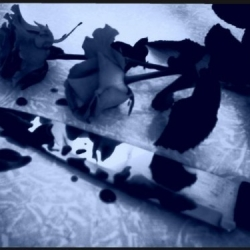 roses_and_knife